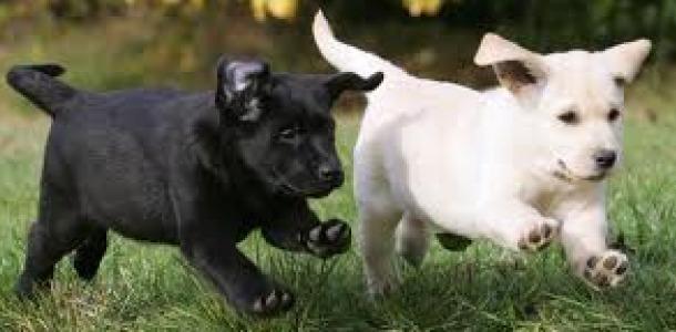 Top 5 dog breeds