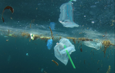 Cut out plastic bottles and straws