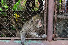 Zoos not the best environment for animals